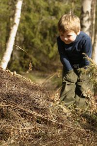 Kind-am-Ameisenhaufen