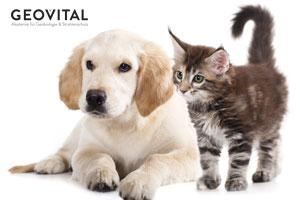 Auch unsere Haustiere leiden unter Krebs!