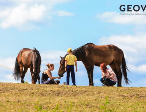 Pferde werden durch Mobilfunk und Strahlung krank